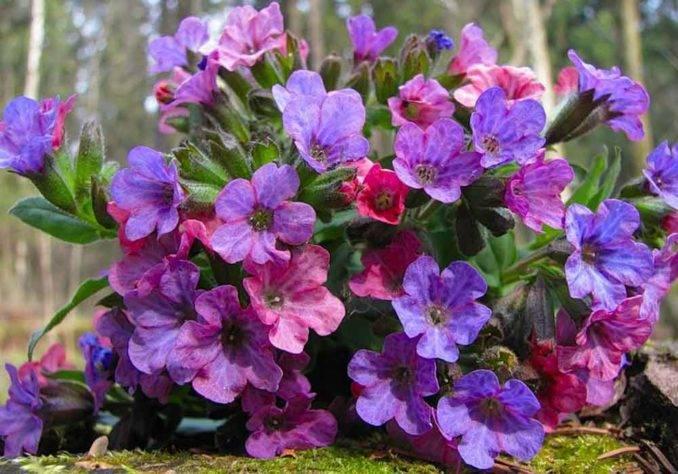 Весенние цветы в саду фото и названия
