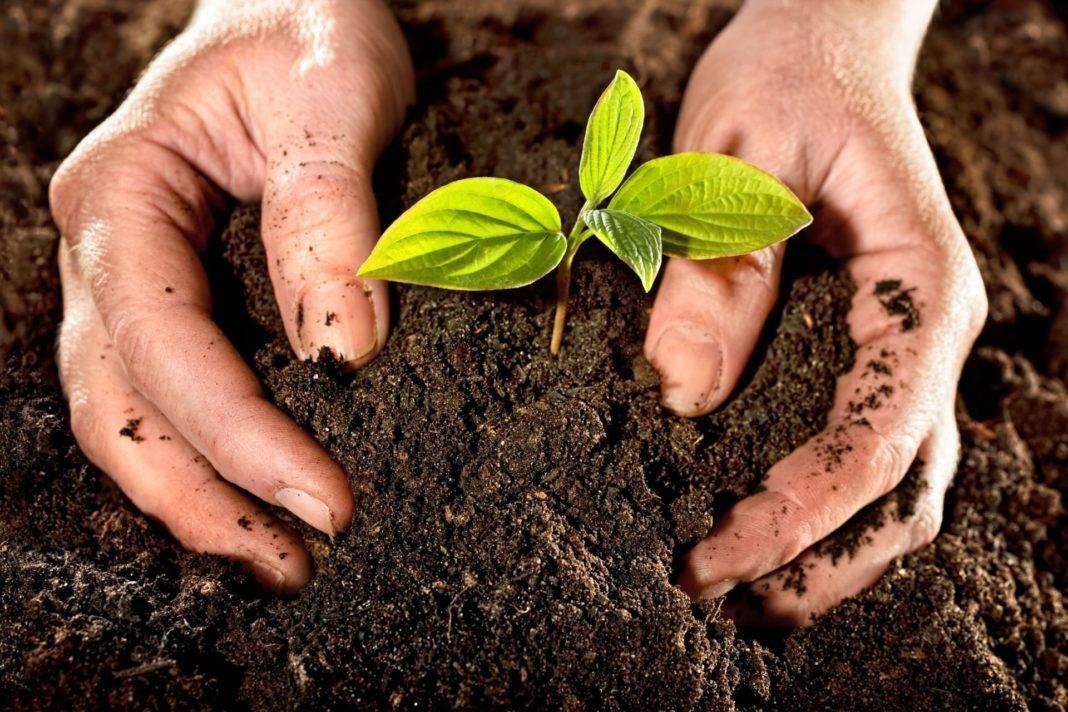 Какое вещество повышает плодородие почвы