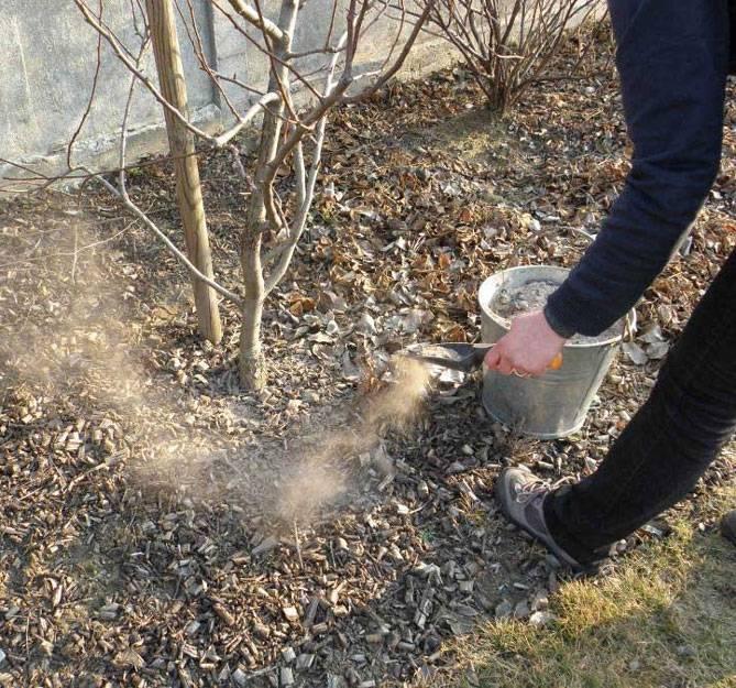 Использование золы в огороде