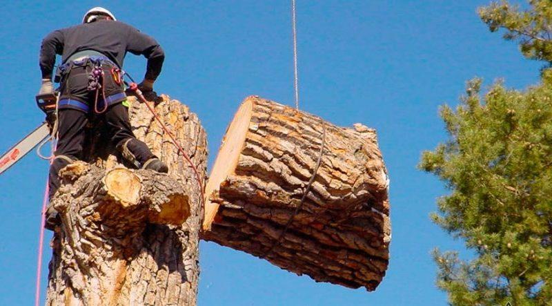 Как спилить дерево возле частного дома