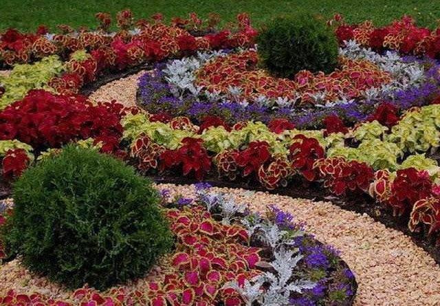 Схема цветника из многолетников непрерывного цветения