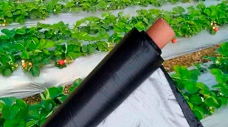 Пленка для клубники от сорняков