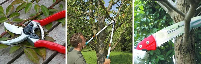 Когда можно обрезать деревья в саду