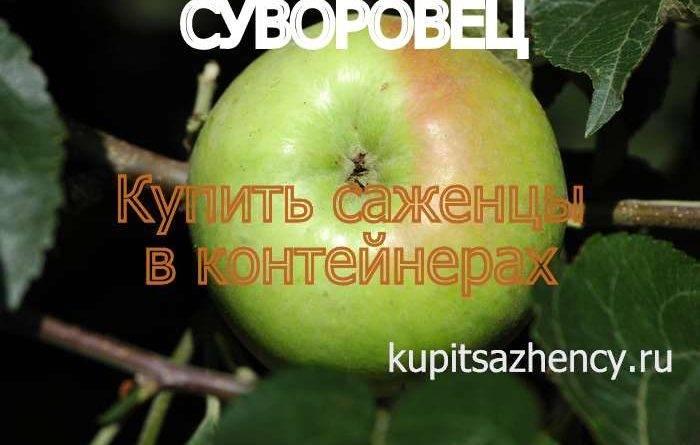 Яблоня суворовец описание фото