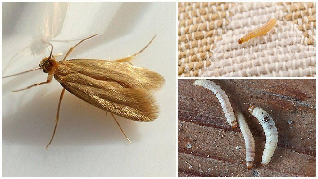 Разновидности гусениц фото