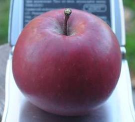 Яблоки цыганка