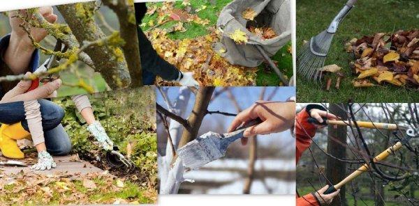 Что делать с деревьями осенью