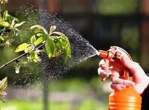 Бордосская смесь применение в садоводстве весной