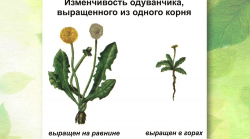Сравнение растений одного вида