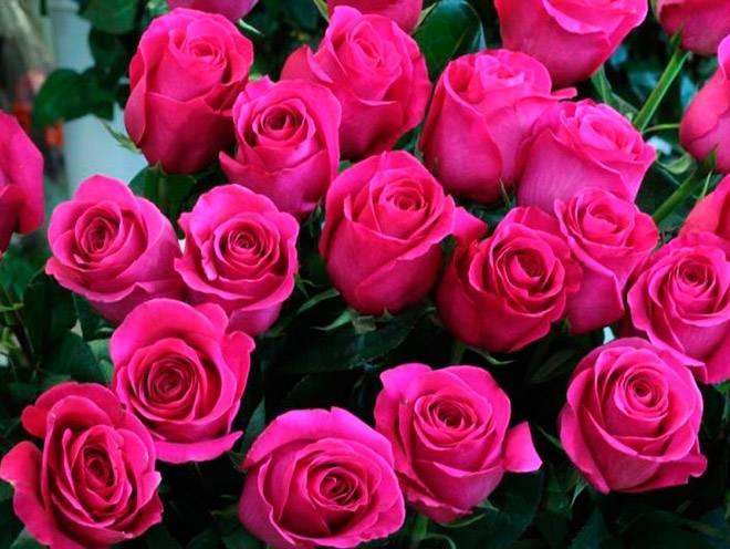 Сорта розовых роз
