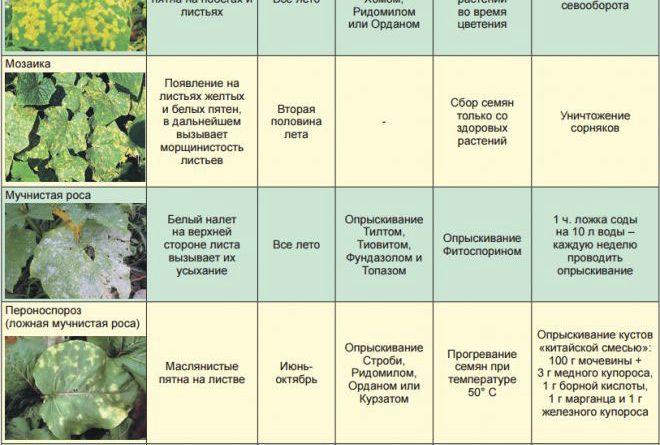 Заболевания огурцов