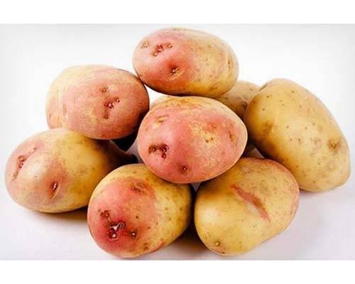 Элитные сорта картофеля для средней полосы