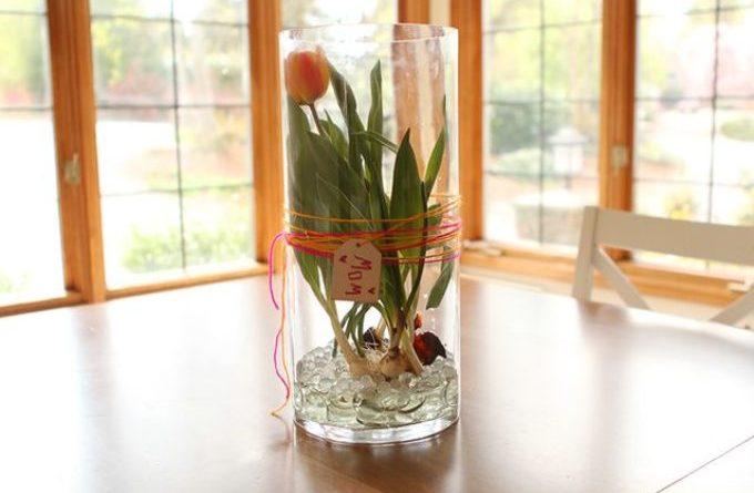 Как сохранить тюльпаны в вазе