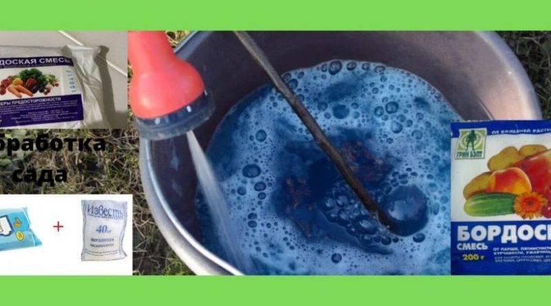Как разводить бордосскую жидкость для опрыскивания
