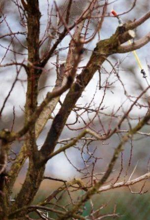 Железный купорос обработка деревьев осенью