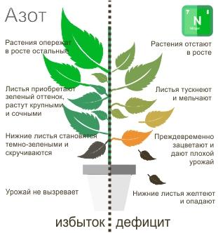 Вещества содержащие азот способствуют