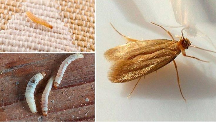 Гусеницы бабочек