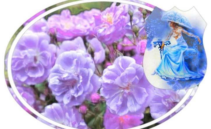 Роза скайлайн фото и описание