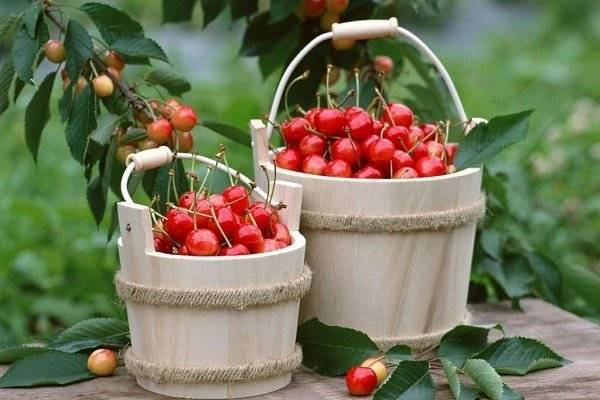 Cherry вишня