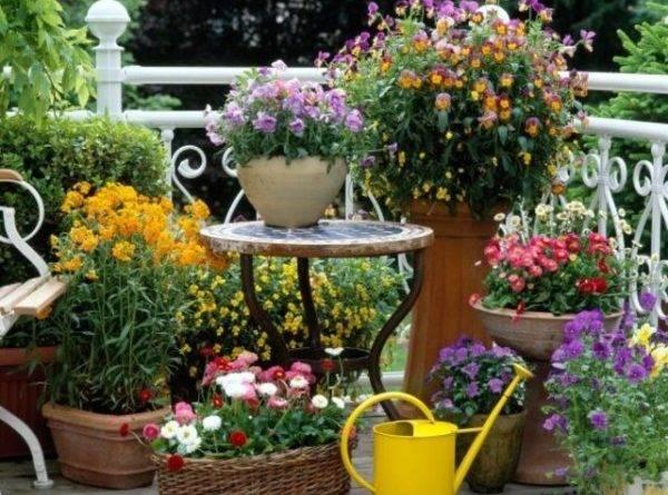 Цветы для клумбы на даче