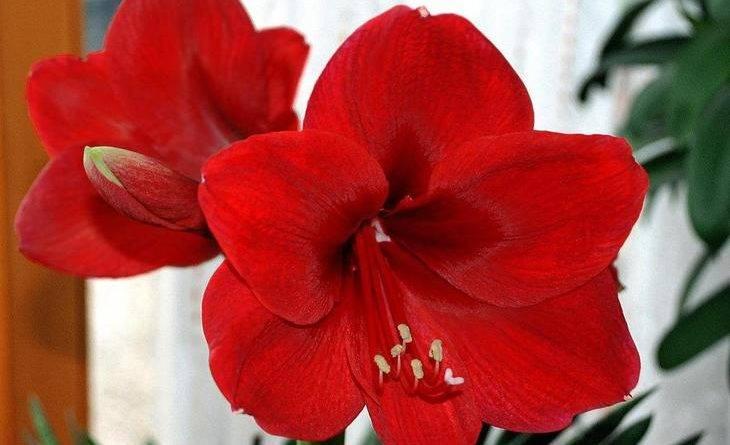 Можно ли поливать комнатные цветы йодом