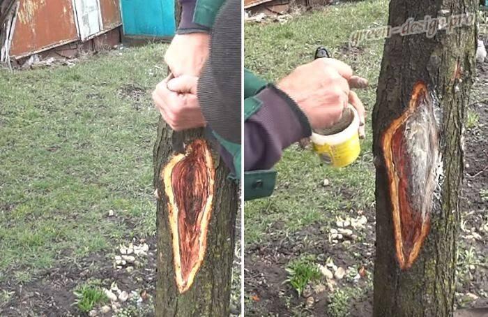 Болезни косточковых деревьев и их лечение фото