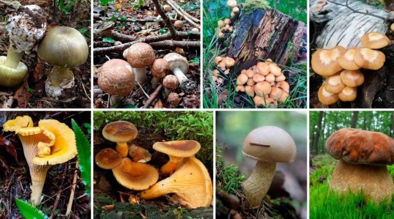 Как определить съедобный гриб или нет