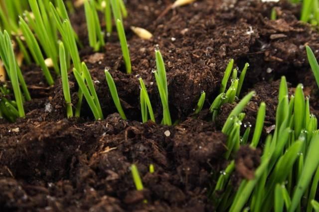 Показателем кислой почвы является появление