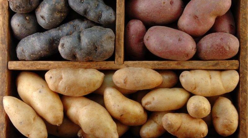 Картофель с красной мякотью