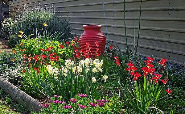Клубневые садовые цветы фото и названия
