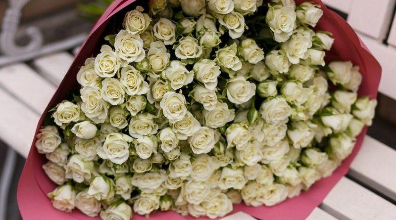 Молочные розы