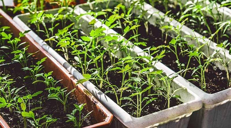 Что можно выращивать в квартире