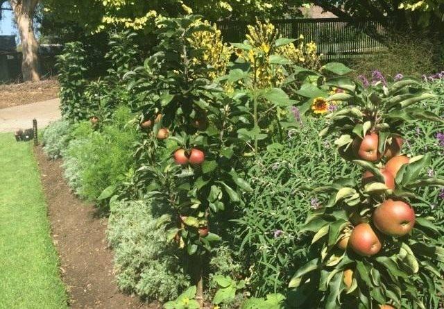 Стволовые яблони
