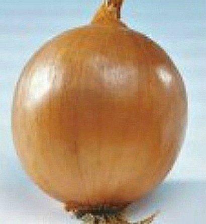 Лук стригуновский местный выращивание из семян