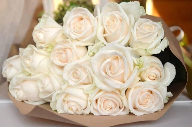 Роза венделла фото и описание