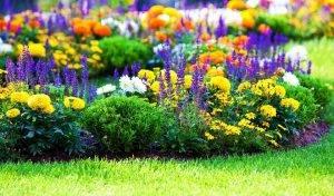 Уход за фиалками комнатными почему плохо цветут