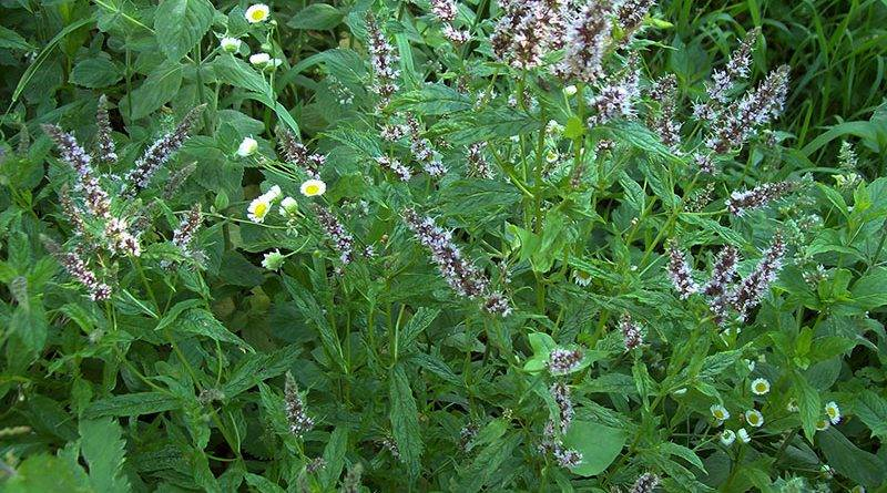 Полезные насекомые в саду и огороде фото