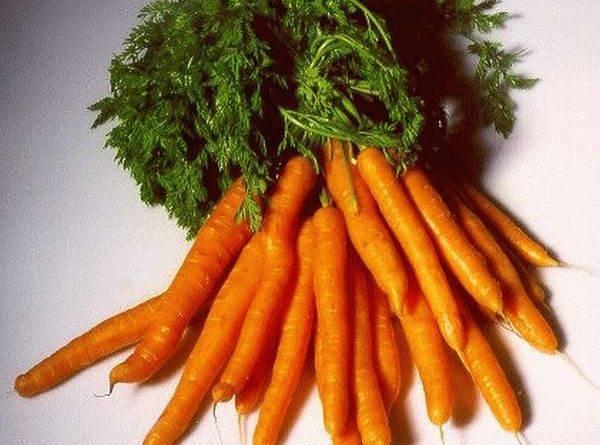 Срок созревания моркови