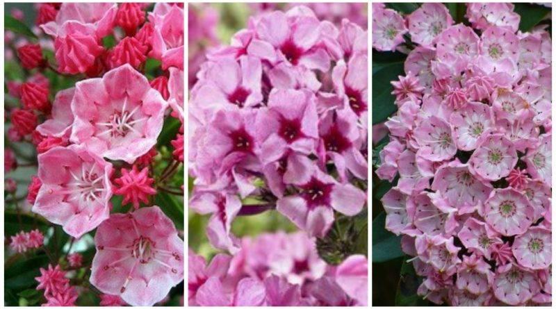 Экзотические цветы для сада