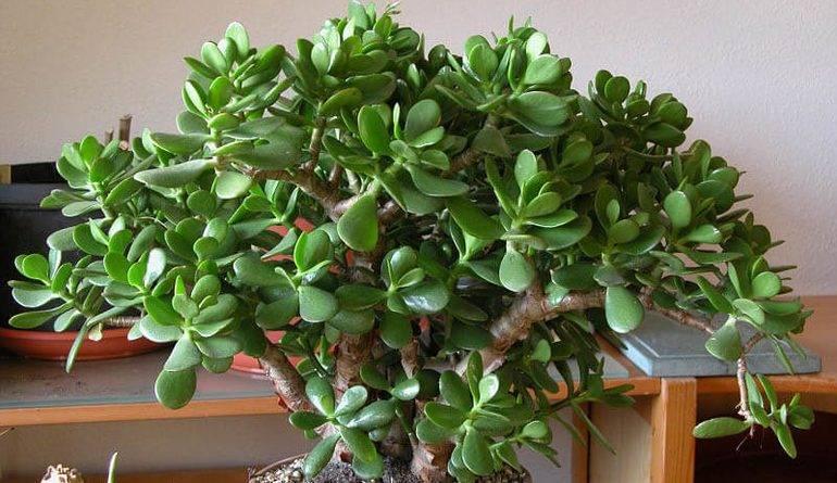 Растения любящие влагу