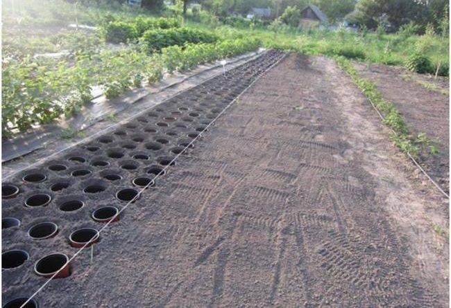 Технологии выращивания растений