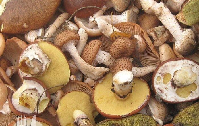 Сколько варить лесные грибы перед жаркой