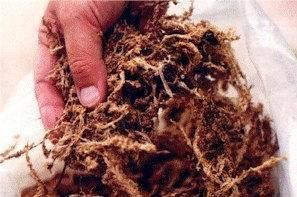 Субстрат для гидропонного выращивания растений