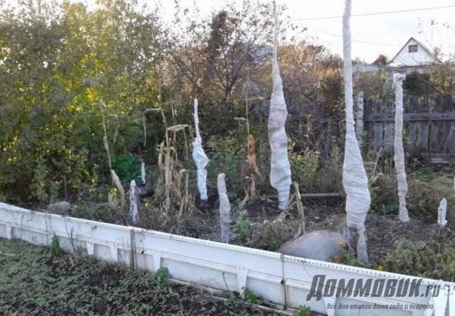 Колоновидные деревья посадка и уход