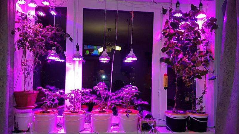 Лампа флора для рассады
