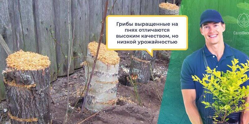 Субстрат для выращивания грибов