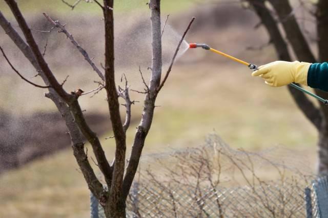 Железный купорос применение в садоводстве весной