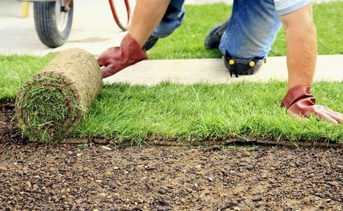 Нужно ли косить газонную траву перед зимой