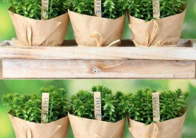 Что можно выращивать на подоконнике зимой