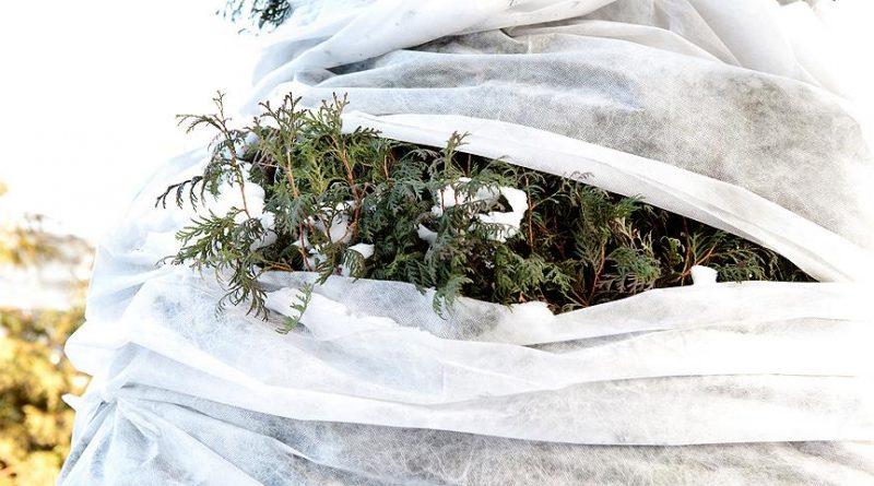 Как укрывать цветы на зиму